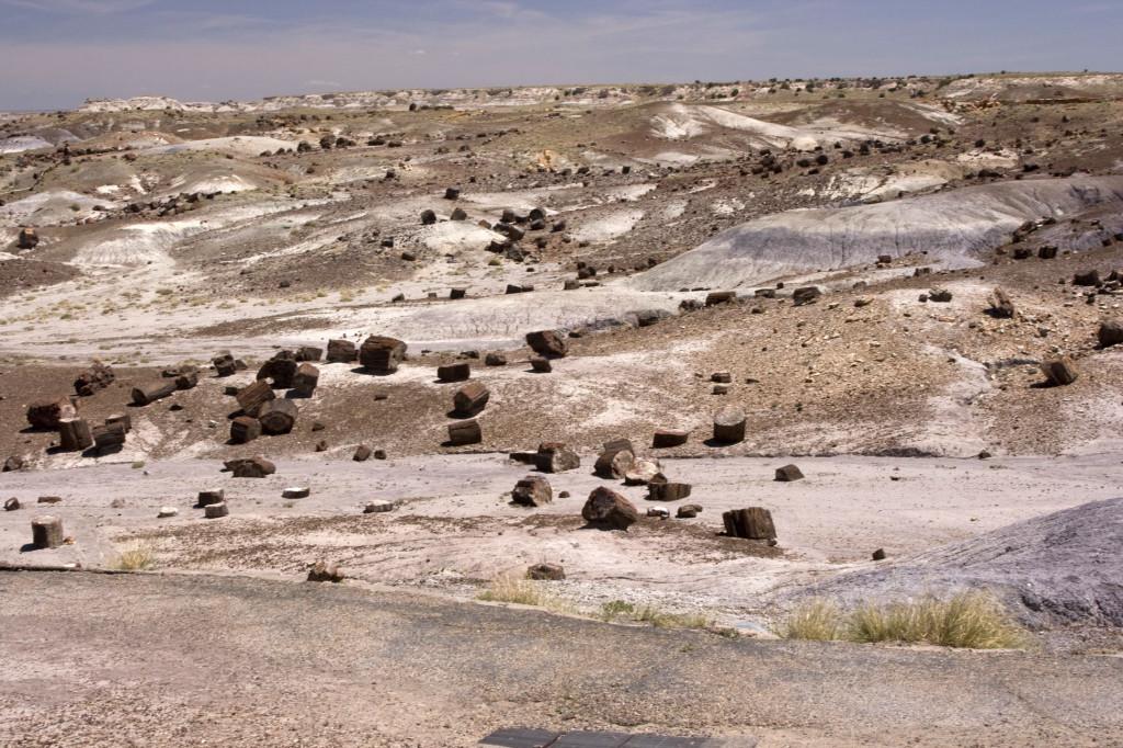 Равнина, усеянная окаменелыми деревьями, и есть Окаменелый лес (Petrified Forest)