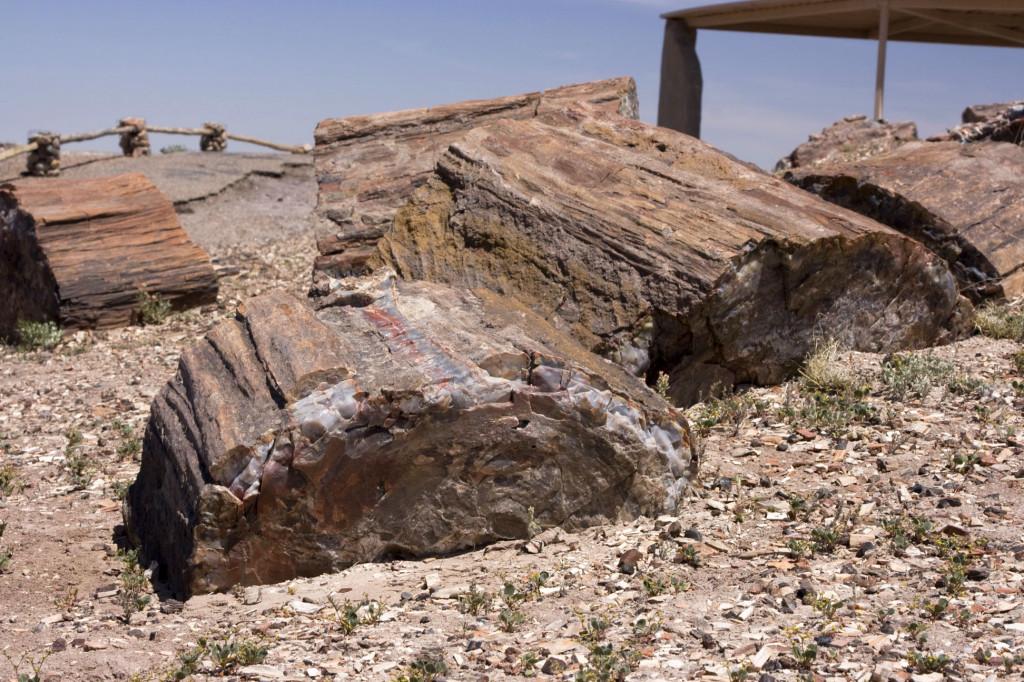 Некоторые бревна земля еще не вытолкнула на поверхность, а другие бревна уже снова проваливаются в песок