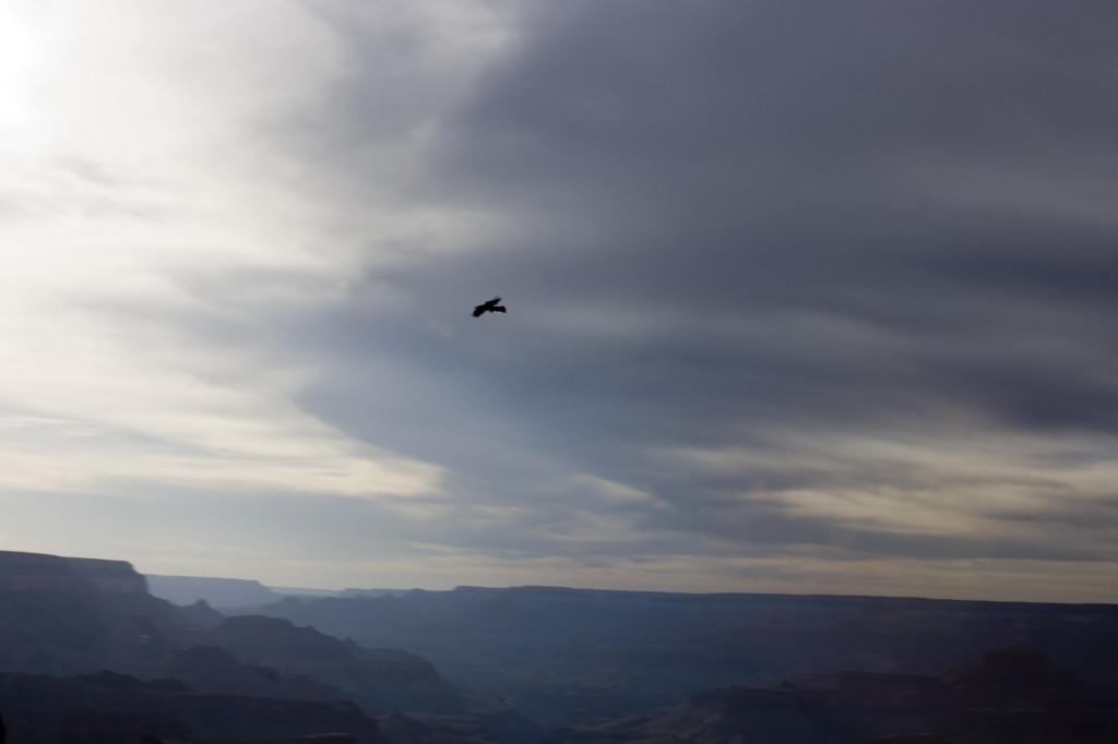 Иногда в небе над Каньоном парят орлы, хотя обычно они летают под нами - в пропасти между скал