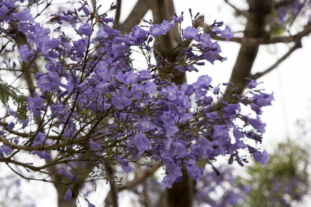 Цветы в Санта-Барбаре